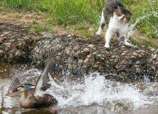 40 αδέσποτες γάτες με προσωπικότητα - Τις καταπληκτικές φωτό τράβηξε γνωστός Ιάπωνας φωτογράφος - Θα τις αγαπήσετε!  - Κυρίως Φωτογραφία - Gallery - Video 13
