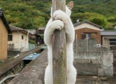 40 αδέσποτες γάτες με προσωπικότητα - Τις καταπληκτικές φωτό τράβηξε γνωστός Ιάπωνας φωτογράφος - Θα τις αγαπήσετε!  - Κυρίως Φωτογραφία - Gallery - Video 14