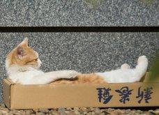 40 αδέσποτες γάτες με προσωπικότητα - Τις καταπληκτικές φωτό τράβηξε γνωστός Ιάπωνας φωτογράφος - Θα τις αγαπήσετε!  - Κυρίως Φωτογραφία - Gallery - Video 15