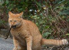 40 αδέσποτες γάτες με προσωπικότητα - Τις καταπληκτικές φωτό τράβηξε γνωστός Ιάπωνας φωτογράφος - Θα τις αγαπήσετε!  - Κυρίως Φωτογραφία - Gallery - Video 21