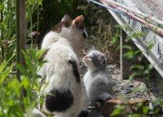 40 αδέσποτες γάτες με προσωπικότητα - Τις καταπληκτικές φωτό τράβηξε γνωστός Ιάπωνας φωτογράφος - Θα τις αγαπήσετε!  - Κυρίως Φωτογραφία - Gallery - Video 25