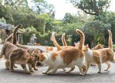 40 αδέσποτες γάτες με προσωπικότητα - Τις καταπληκτικές φωτό τράβηξε γνωστός Ιάπωνας φωτογράφος - Θα τις αγαπήσετε!  - Κυρίως Φωτογραφία - Gallery - Video 26