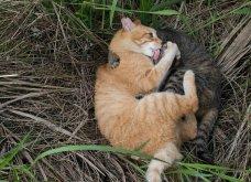 40 αδέσποτες γάτες με προσωπικότητα - Τις καταπληκτικές φωτό τράβηξε γνωστός Ιάπωνας φωτογράφος - Θα τις αγαπήσετε!  - Κυρίως Φωτογραφία - Gallery - Video 27