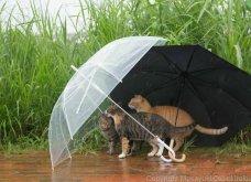 40 αδέσποτες γάτες με προσωπικότητα - Τις καταπληκτικές φωτό τράβηξε γνωστός Ιάπωνας φωτογράφος - Θα τις αγαπήσετε!  - Κυρίως Φωτογραφία - Gallery - Video 29
