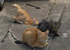 40 αδέσποτες γάτες με προσωπικότητα - Τις καταπληκτικές φωτό τράβηξε γνωστός Ιάπωνας φωτογράφος - Θα τις αγαπήσετε!  - Κυρίως Φωτογραφία - Gallery - Video 31
