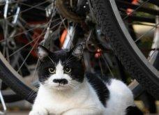 40 αδέσποτες γάτες με προσωπικότητα - Τις καταπληκτικές φωτό τράβηξε γνωστός Ιάπωνας φωτογράφος - Θα τις αγαπήσετε!  - Κυρίως Φωτογραφία - Gallery - Video 32