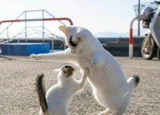 40 αδέσποτες γάτες με προσωπικότητα - Τις καταπληκτικές φωτό τράβηξε γνωστός Ιάπωνας φωτογράφος - Θα τις αγαπήσετε!  - Κυρίως Φωτογραφία - Gallery - Video 33