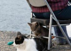 40 αδέσποτες γάτες με προσωπικότητα - Τις καταπληκτικές φωτό τράβηξε γνωστός Ιάπωνας φωτογράφος - Θα τις αγαπήσετε!  - Κυρίως Φωτογραφία - Gallery - Video 34