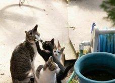 40 αδέσποτες γάτες με προσωπικότητα - Τις καταπληκτικές φωτό τράβηξε γνωστός Ιάπωνας φωτογράφος - Θα τις αγαπήσετε!  - Κυρίως Φωτογραφία - Gallery - Video 35