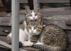 40 αδέσποτες γάτες με προσωπικότητα - Τις καταπληκτικές φωτό τράβηξε γνωστός Ιάπωνας φωτογράφος - Θα τις αγαπήσετε!  - Κυρίως Φωτογραφία - Gallery - Video 36