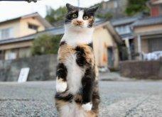 40 αδέσποτες γάτες με προσωπικότητα - Τις καταπληκτικές φωτό τράβηξε γνωστός Ιάπωνας φωτογράφος - Θα τις αγαπήσετε!  - Κυρίως Φωτογραφία - Gallery - Video 38