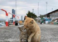 40 αδέσποτες γάτες με προσωπικότητα - Τις καταπληκτικές φωτό τράβηξε γνωστός Ιάπωνας φωτογράφος - Θα τις αγαπήσετε!  - Κυρίως Φωτογραφία - Gallery - Video 39