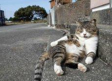 40 αδέσποτες γάτες με προσωπικότητα - Τις καταπληκτικές φωτό τράβηξε γνωστός Ιάπωνας φωτογράφος - Θα τις αγαπήσετε!  - Κυρίως Φωτογραφία - Gallery - Video 40