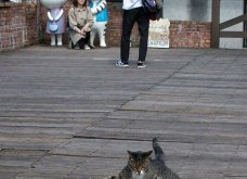 40 αδέσποτες γάτες με προσωπικότητα - Τις καταπληκτικές φωτό τράβηξε γνωστός Ιάπωνας φωτογράφος - Θα τις αγαπήσετε!  - Κυρίως Φωτογραφία - Gallery - Video 41