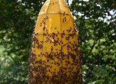 """Βασίλισσα Νεφερτίτη: Αυτό το εντυπωσιακό άγαλμα της ονομάζεται """"Αιωνιότητα"""" - Το έφτιαξαν 60.000 μέλισσες (φώτο-βίντεο)  - Κυρίως Φωτογραφία - Gallery - Video 13"""