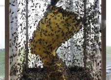 """Βασίλισσα Νεφερτίτη: Αυτό το εντυπωσιακό άγαλμα της ονομάζεται """"Αιωνιότητα"""" - Το έφτιαξαν 60.000 μέλισσες (φώτο-βίντεο)  - Κυρίως Φωτογραφία - Gallery - Video 3"""