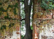 Όταν η φύση νικά τον πολιτισμό: 20 εντυπωσιακά κλις - Το χωριό που χάθηκε κάτω από τα φυτά, το πελώριο δέντρο που «κατάπιε» μια καμινάδα - Κυρίως Φωτογραφία - Gallery - Video 4