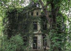 Όταν η φύση νικά τον πολιτισμό: 20 εντυπωσιακά κλις - Το χωριό που χάθηκε κάτω από τα φυτά, το πελώριο δέντρο που «κατάπιε» μια καμινάδα - Κυρίως Φωτογραφία - Gallery - Video 6
