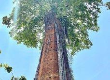 Όταν η φύση νικά τον πολιτισμό: 20 εντυπωσιακά κλις - Το χωριό που χάθηκε κάτω από τα φυτά, το πελώριο δέντρο που «κατάπιε» μια καμινάδα - Κυρίως Φωτογραφία - Gallery - Video 13