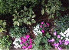 Ο κήπος μου μικρός αλλά χρωματιστός & μυρωδάτος! - Κυρίως Φωτογραφία - Gallery - Video 2