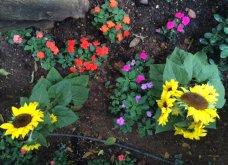 Ο κήπος μου μικρός αλλά χρωματιστός & μυρωδάτος! - Κυρίως Φωτογραφία - Gallery - Video