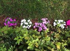 Ο κήπος μου μικρός αλλά χρωματιστός & μυρωδάτος! - Κυρίως Φωτογραφία - Gallery - Video 4