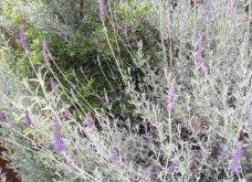 Ο κήπος μου μικρός αλλά χρωματιστός & μυρωδάτος! - Κυρίως Φωτογραφία - Gallery - Video 5