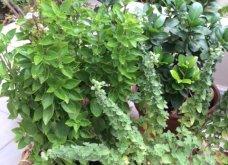 Ο κήπος μου μικρός αλλά χρωματιστός & μυρωδάτος! - Κυρίως Φωτογραφία - Gallery - Video 6