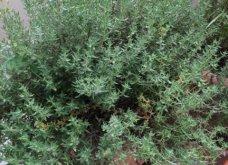 Ο κήπος μου μικρός αλλά χρωματιστός & μυρωδάτος! - Κυρίως Φωτογραφία - Gallery - Video 7
