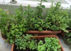 Ο κήπος μου μικρός αλλά χρωματιστός & μυρωδάτος! - Κυρίως Φωτογραφία - Gallery - Video 8