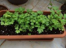 Ο κήπος μου μικρός αλλά χρωματιστός & μυρωδάτος! - Κυρίως Φωτογραφία - Gallery - Video 9