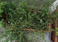 Ο κήπος μου μικρός αλλά χρωματιστός & μυρωδάτος! - Κυρίως Φωτογραφία - Gallery - Video 11