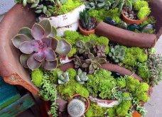 Φαντασία & μεράκι για μικρούς φανταστικούς κήπους μέσα σε σπασμένες γλαστρούλες - Κυρίως Φωτογραφία - Gallery - Video 7