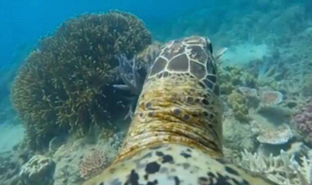 Βίντεο: Το συναρπαστικό ταξίδι μιας θαλάσσιας χελώνας με Gopro στη πλάτη της - Κυρίως Φωτογραφία - Gallery - Video