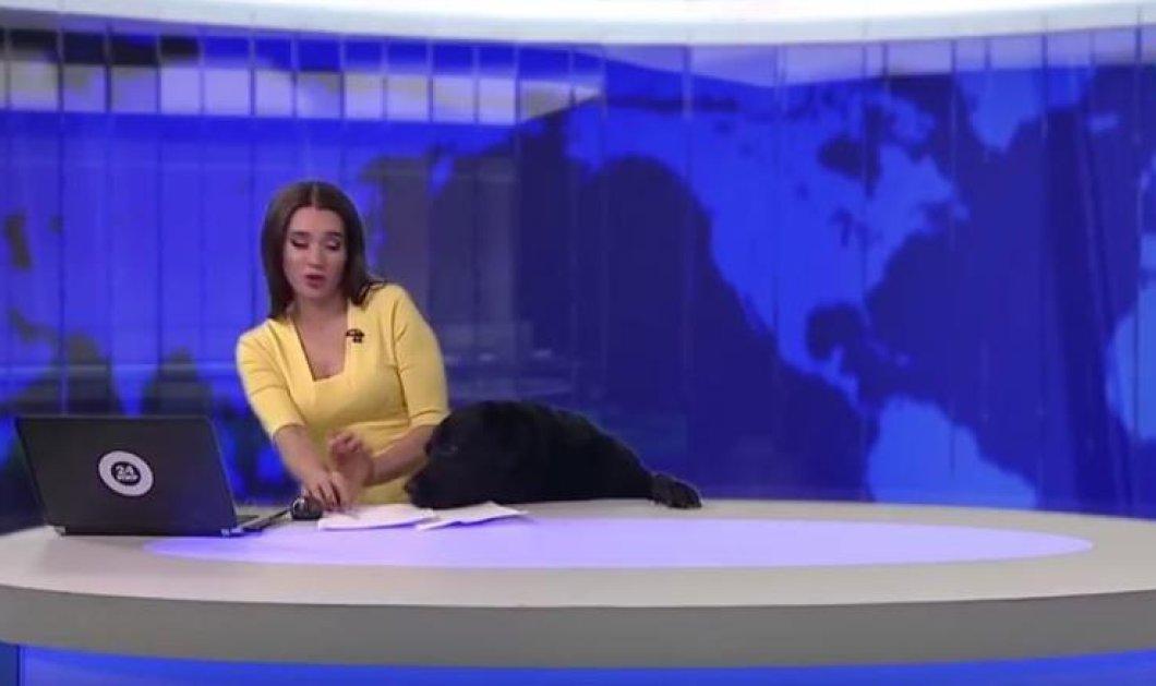 Το βίντεο της ημέρας: Ένας απρόσμενος επισκέπτης ήθελε να βγει στο γυαλί την ώρα του δελτίου ειδήσεων - Κυρίως Φωτογραφία - Gallery - Video