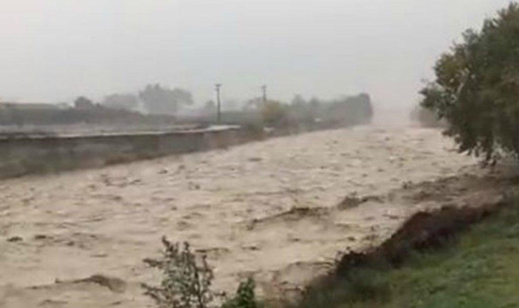 Εντυπωσιακό βίντεο: Φουσκωμένο ποτάμι στην Κατερίνη «καταπίνει» δέντρο - Κυρίως Φωτογραφία - Gallery - Video