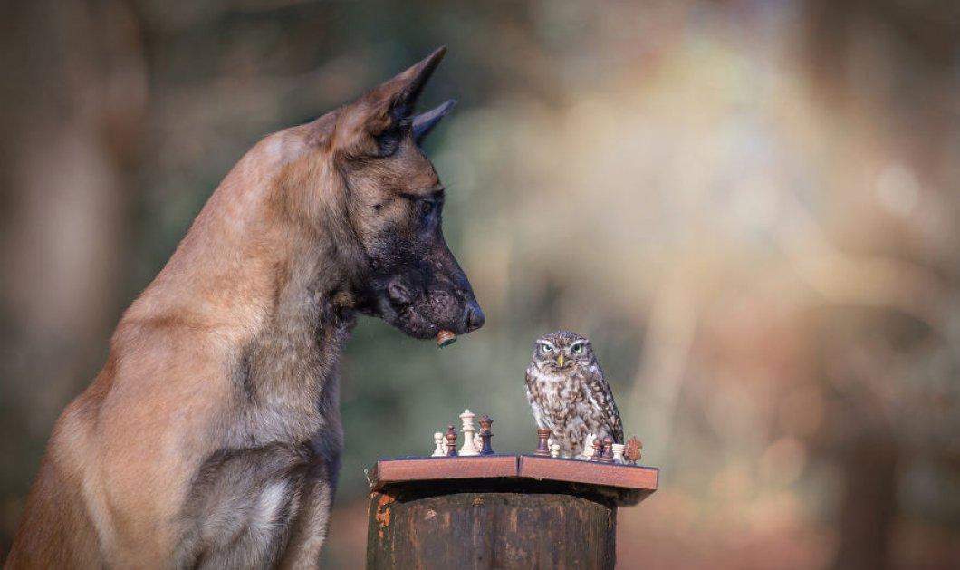 Υπέροχες φωτογραφίες μιας μεγάλης φιλίας- Ο σκύλος Ingo και οι φίλες του οι κουκουβάγιες- Αξιολάτρευτοι! (ΦΩΤΟ) - Κυρίως Φωτογραφία - Gallery - Video