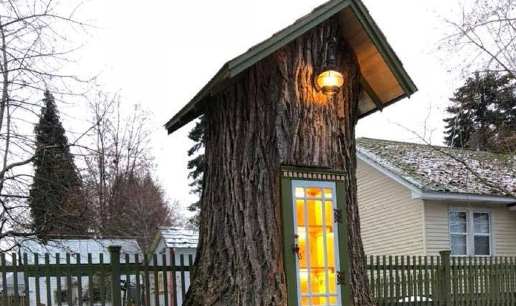 Ο κορμός δέντρου ηλικίας 110 ετών που έγινε βιβλιοθήκη! You will love it! - Κυρίως Φωτογραφία - Gallery - Video