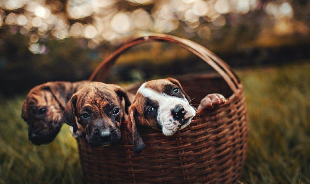 Παγκόσμια Ημέρα των Ζώων - 4 Οκτωβρίου: Τα αγαπάμε, τα φροντίζουμε, τα προσέχουμε - έχουν δικαιώματα, όπως και εμείς - Κυρίως Φωτογραφία - Gallery - Video
