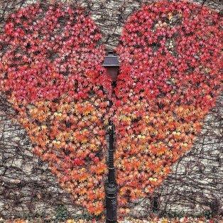 Φωτό ημέρας: Η φθινοπωρινή καρδιά – Μια εικόνα, χίλιες λέξεις/ Photo: Intagram - @patrickcolpron - Κυρίως Φωτογραφία - Gallery - Video