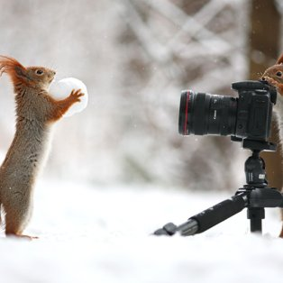 18/2/2015 - Δύο σκιουράκια παίζουν με το χιόνι και το ένα φωτογραφίζει το άλλο! Θεικό! Picture: Vadim Trunov/Solent News - Κυρίως Φωτογραφία - Gallery - Video