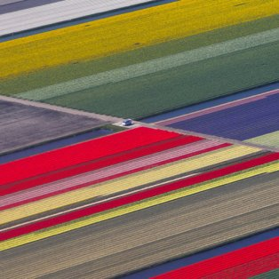 16/4/2015 - Πανέμορφη φωτό από ψηλά με θέα τους πολύχρωμους & φανταστικούς κήπους στην Ολλανδία! Picture: REUTERS/Yves Herman  - Κυρίως Φωτογραφία - Gallery - Video