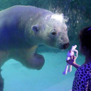 18/4/2015 - Πανέμορφη φωτό με την πολική αρκούδα και το κοριτσάκι στο ενυδρείο του Σάο Πάολο στην Βραζιλία! Picture: AP Photo/Andre Penner - Κυρίως Φωτογραφία - Gallery - Video