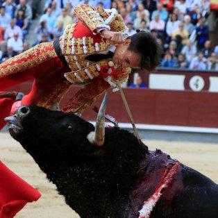 Η στιγμή που ο ταύρος τρυπάει με το κέρατό του, τον Ισπανό ταυρομάχο Juan del Alamo - Fernando Alvarado/EPA - Κυρίως Φωτογραφία - Gallery - Video