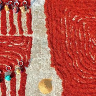 Μια εικόνα σαν ζωγραφιά! Κόκκινο έγινε το τοπίο από την συλλογή πιπεριάς στο Μπαγκλαντές - Photo: AZIM KHAN RONNIE/CATERS NEA  - Κυρίως Φωτογραφία - Gallery - Video