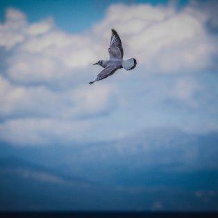 Θα ζήσω ελεύθερο πουλί/ Photo: Eurokinissi - Κυρίως Φωτογραφία - Gallery - Video