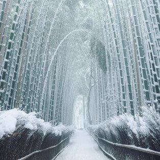 """Φωτογραφία ημέρας: Αυτό το χιονισμένο δάσος με μπαμπού είναι """"μαγικό"""" - """"Ντύθηκε όλο στα λευκά"""" - Photo: Fubiz / @mantaroq⠀ - Κυρίως Φωτογραφία - Gallery - Video"""