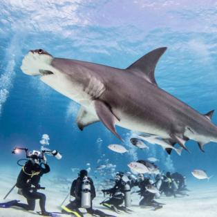 Φωτογραφία ημέρας: Η άγρια ζωή κάτω από τον ωκεανό της Καραϊβικής - Καρχαρίας & ψάρια γίνονται θέαμα για τους δύτες - Photo: MEDIADRUMIMAGES/KENKIEFE/RII - Κυρίως Φωτογραφία - Gallery - Video