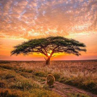 Φωτό ημέρας: Ο βασιλιάς των λιονταριών – Ένα κλικ από την άγρια φύση/ Photo: Instagram - @agpfoto - Κυρίως Φωτογραφία - Gallery - Video