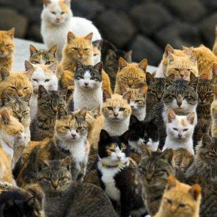 3/3/15: Δείτε το νησί της Ιαπωνίας όπου οι γάτες έχουν κάνει κατάληψη! 6 προς 1 η αριθμητική τους υπεροπλία έναντι των κατοίκων! Φωτό: REUTERS/Thomas Peter - Κυρίως Φωτογραφία - Gallery - Video